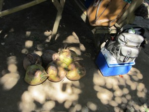 und zum Abschied noch ein paar Kokosnüsse